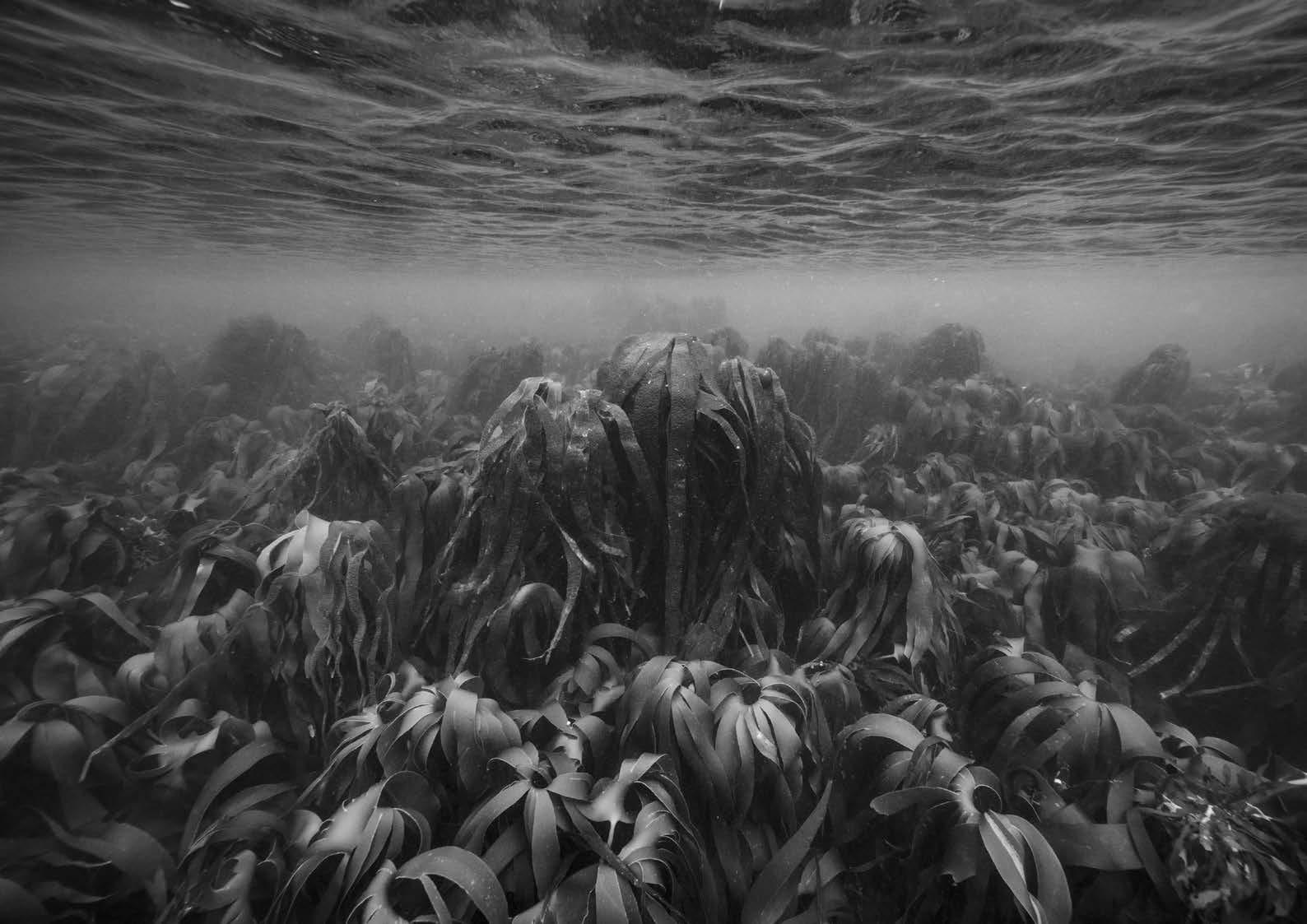© Nicolas Floc'h_Paysages productifs, Initium Maris, 0uessant, - 7m, 2016
