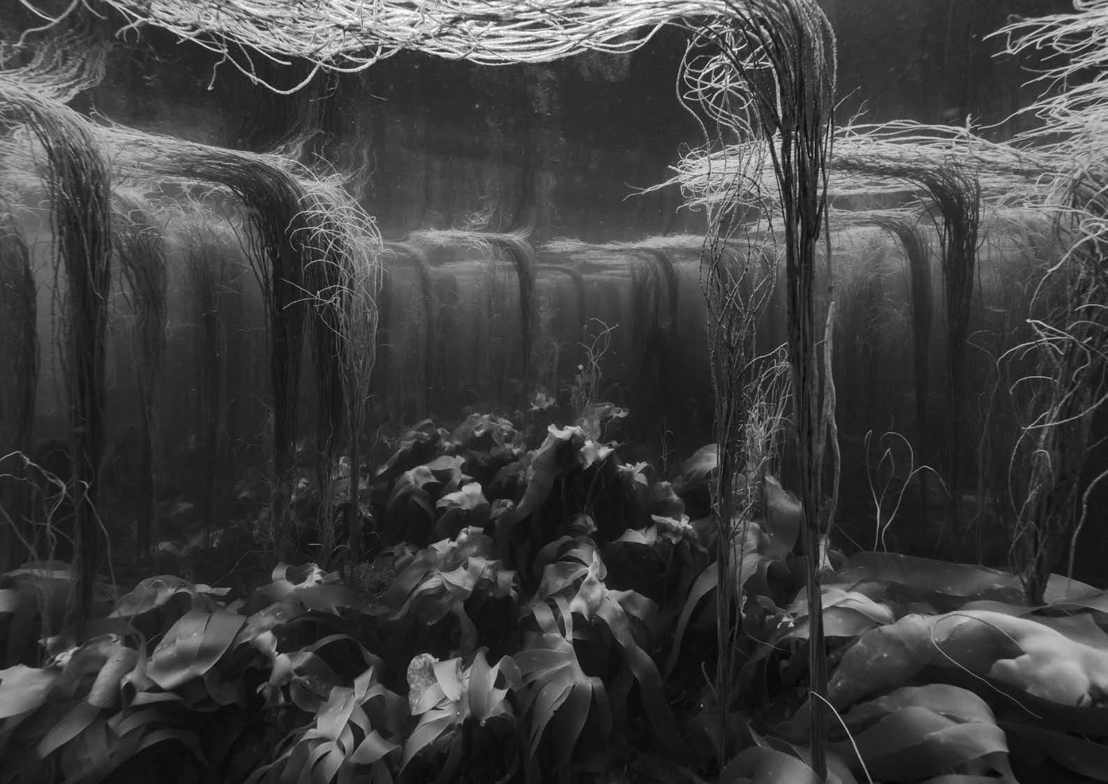 © Nicolas Floc'h_Paysages productifs, Initium Maris, Audierne, - 8m, 2019