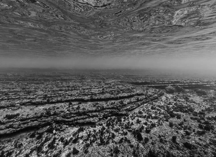 © Nicolas Floc'h_Paysages productifs, invisible, Anse de l'Arène, - 4m, 2018